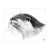 Otter Alpha