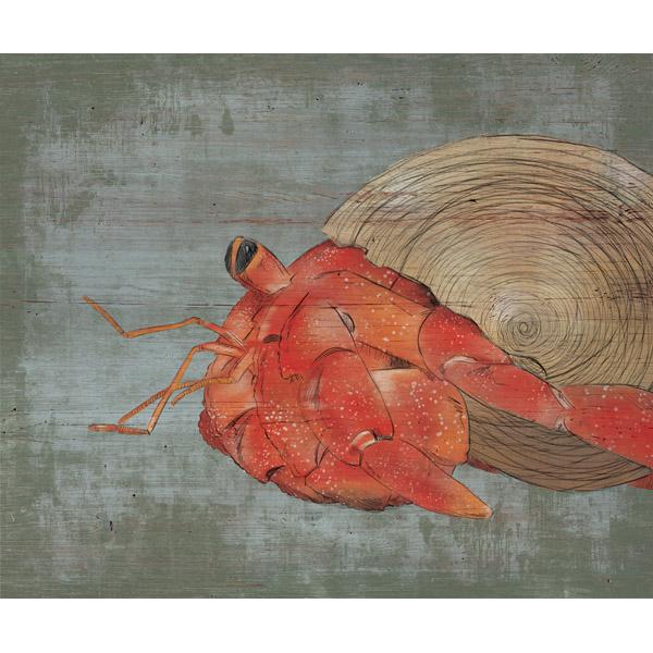 Big Hermit Crab Alpha