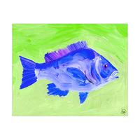 Snapper Fish Alpha