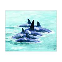 Pod Of Orcas Alpha