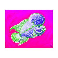 Flowerhorn Fish Alpha