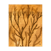 Old Sea Coral