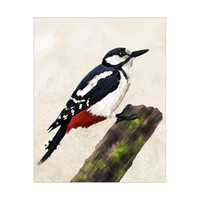 Painted Great Spotted Woodpecker
