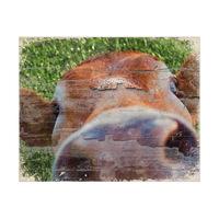 Close Up Cow Alpha