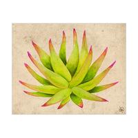 Aloe Alpha