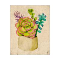 Happy Succulents Alpha
