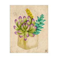 Cheerful Succulents Alpha