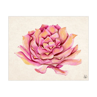 Rose Succulent Alpha