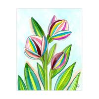 Tulipano Ascobaleno