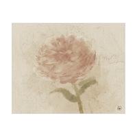 Pink Flower Alpha