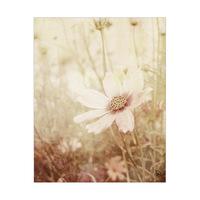 Field Flower Alpha