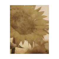 Sunflower Alpha
