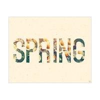 Cream Spring Daisy