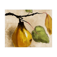 Hanging Quince