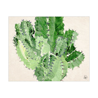 Euphorbia Detail Alpha