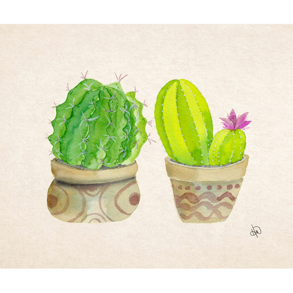 Two Round Cacti Alpha