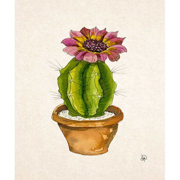 Spiky Baby Cactus Alpha
