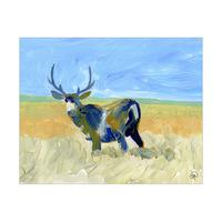 Mule Deer Alpha
