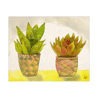 Succulents In Checker Pots Alpha