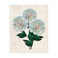 Big White Carnation - Paper