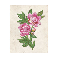 Pink Carnation - paper