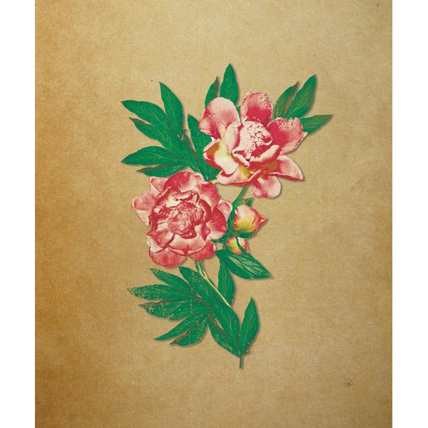 Blushing Carnation