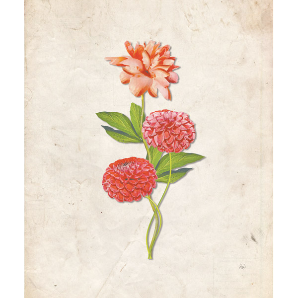 Dahlia and Carnation on Parchment