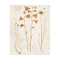 Dry Wildflowers - Tan