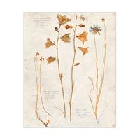 Dry Wildflowers - Tan