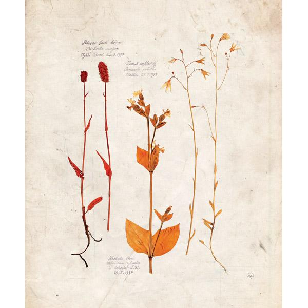 Dry Floral Specimens - White
