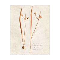 Dry Lily - Tan