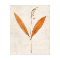 Dry Bellflowers - Tan
