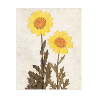 Dry Yellown Sunflowers - Tan