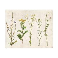 4S Dry Flowers - Tan Paper