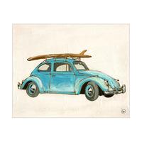 Surf Beetle