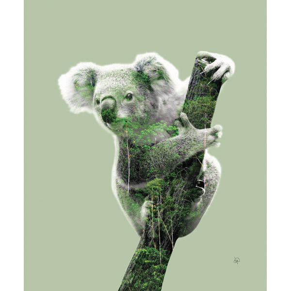 Koala in RainForest