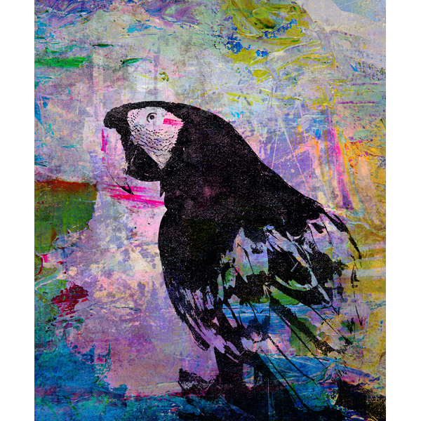 Abstract Paint - Black Parrot